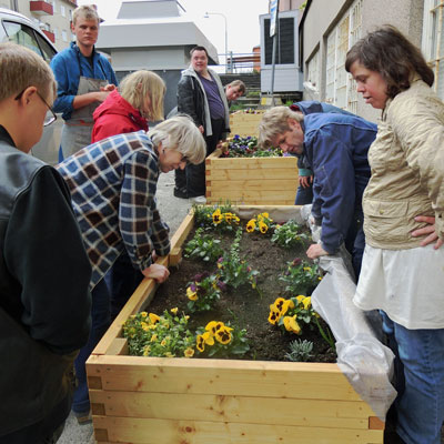 Vi odlar blommor och grönsaker i våra odlingslådor.